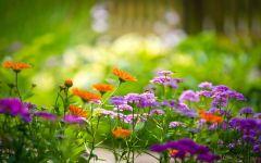 Цветущий сад – гордость дачника