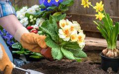 Цветник на даче своими руками: этапы пошагово и ценные советы
