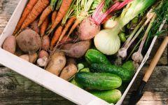 Как сохранить урожай свежим