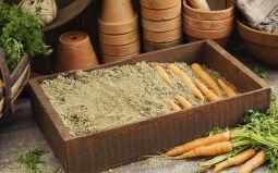 Как сохранить морковь до следующего урожая. Способы и условия хранения.