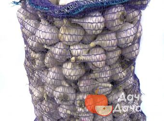 Чеснок озимый сорт Кавалер, фото 3