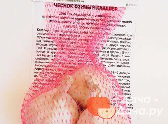Чеснок озимый сорт Кавалер, фото 9
