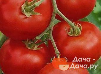Сорт томатов артист