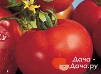 Характеристика и описание сорта томата Марисса