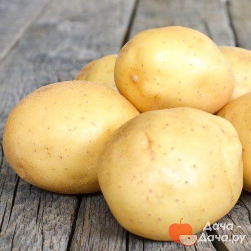 фото битвы картофеля невский давида один